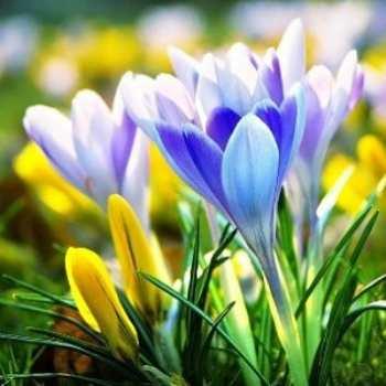 ТОП-10 сезонных вкладов весны