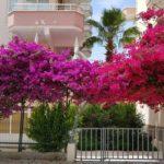 Личный опыт: квартира с «исламской ипотекой» для переезда в Турцию